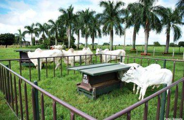 Sistema de cria em pecuária de corte
