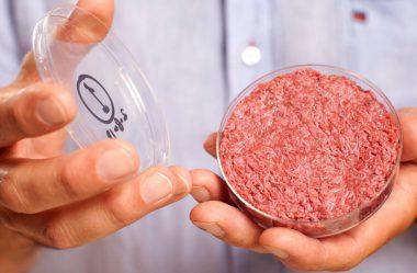 """A """"carne"""" de Laboratório vai acabar com minha fazenda?"""