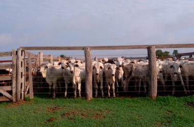 Análise de mercado 2020 sobre a pecuária brasileira
