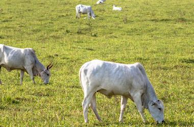 Diferimento de Pastagens: garantindo um bom desempenho durante a seca