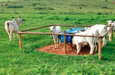Creep feeding: uma boa opção para melhores índices zootécnicos na fase de cria?