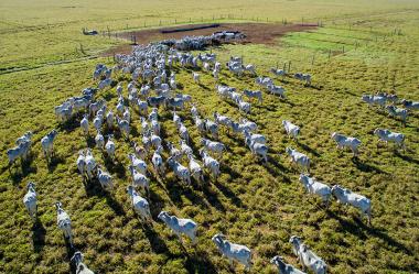 Qualidade da pastagem para bovinos requer manejo adequado para desenvolver potencial