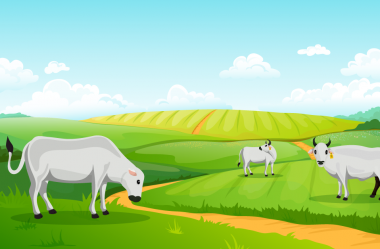 Pastagem de qualidade para o gado é fator determinante no produto final