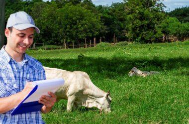 Passo a passo: calculando o custo por @ produzida na fazenda!
